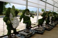 Dwarf Topiary