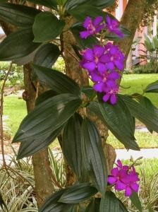 Caribbean Beach Floral Detail